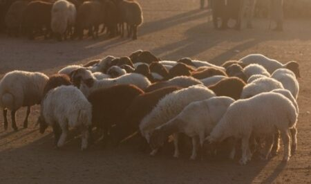 Koyun ve Keçi Yem Fiyatları 2021 Güncel Liste