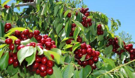 Ziraat Bankası Meyve Bahçesi Kredisi 2021 Şartları