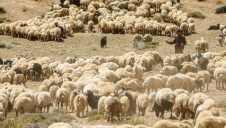 Sürü Yöneticisi Desteği Nasıl Alınır? 2021 Sertifikalı Çoban