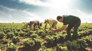 Çiftçiye En Çok Kazandıran Tarım Ürünleri 2021 En Karlı Tarım Ürünleri