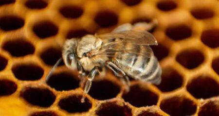 KOSGEB Arıcılık Hibe Desteği ve Arıcılık Desteklemesi 2021