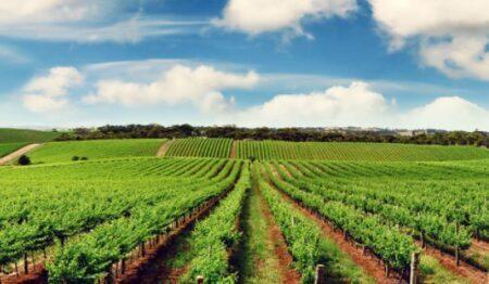 Çiftçilere Özel Harman Ödemeli Kredi Kartı 2021 (Ziraat)