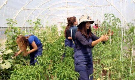 Genç Çiftçi Hibe Desteği Şartları 2021 Başvuru